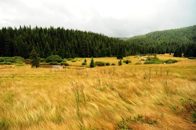Pustiu, neumblat, în Valea Frumoasei / Sursa foto: Florian-Rareș Tileagă